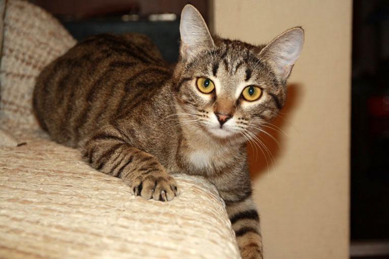 8-месячная кошка Зена ищет новый дом