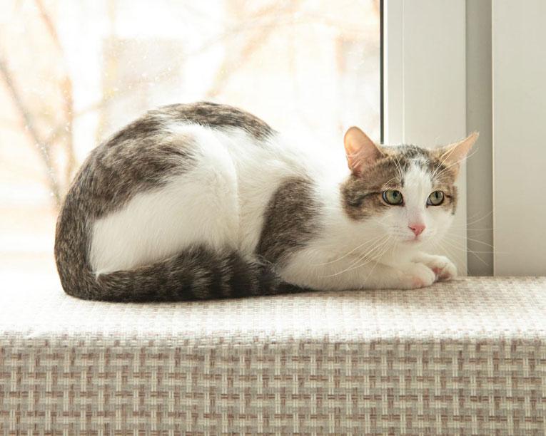 Чудесный молодой котик Тайсон ищет семью