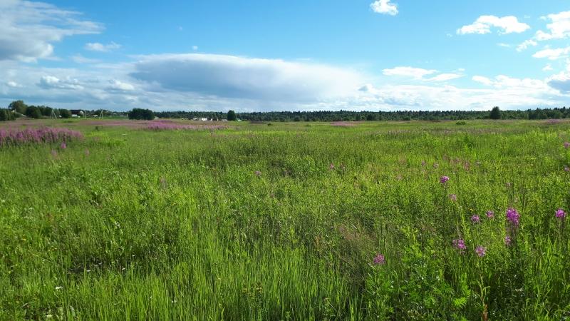 Участок 50 гектар сх хозяйство