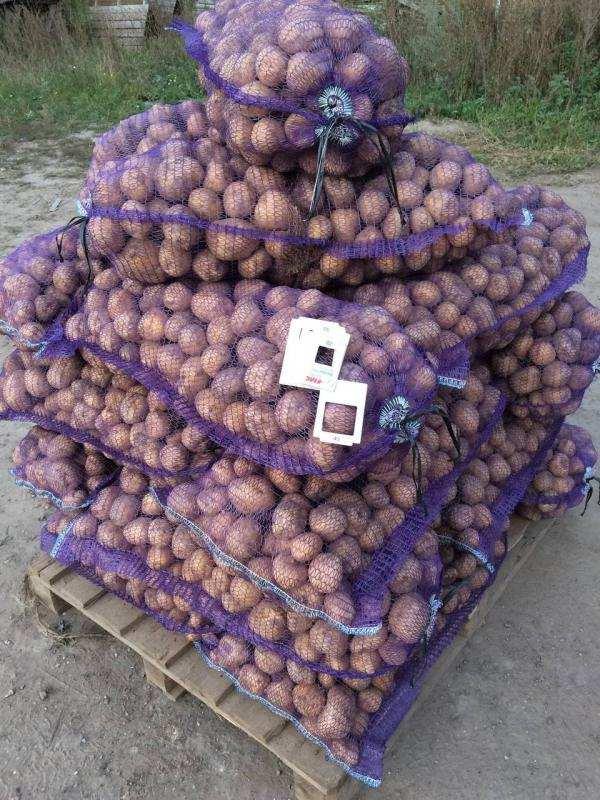 Картофель от производителя. Возможен обмен на спецтехнику и др.